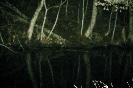 creepy forest lake