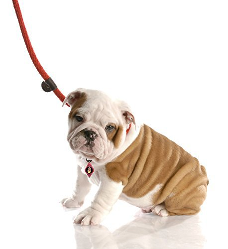leash for dogs - Google Search