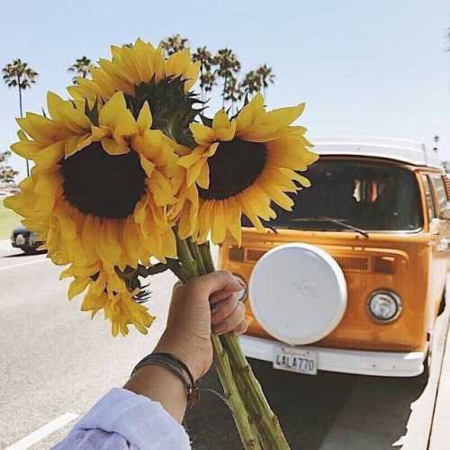 sunflowers | Tumblr