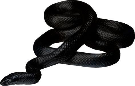black snake png filler mood