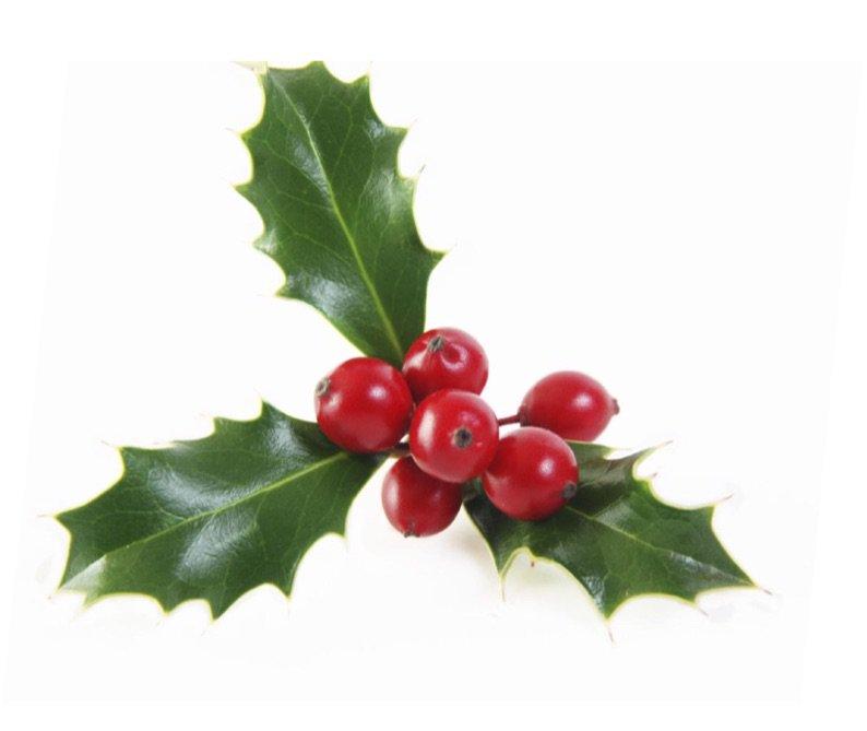 Holiday Mistletoe