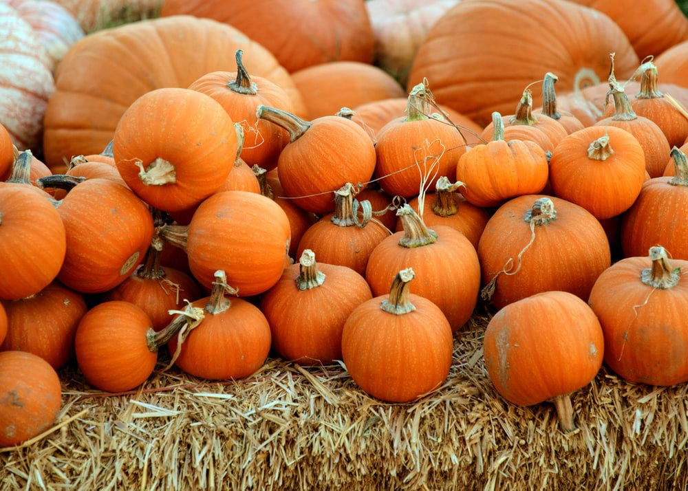 The Pumpkin Patch background