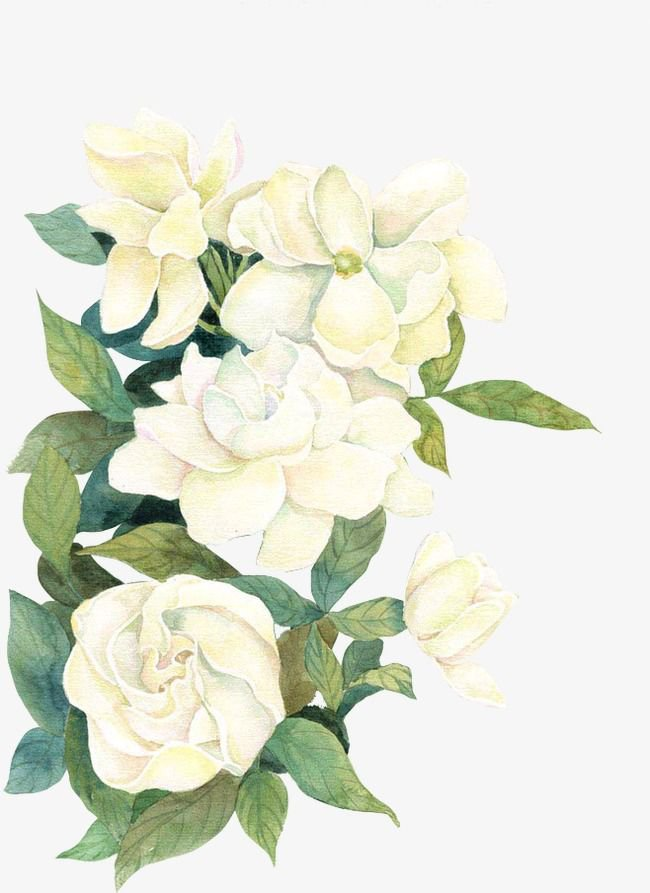 fall flowers png psd - Google'da Ara