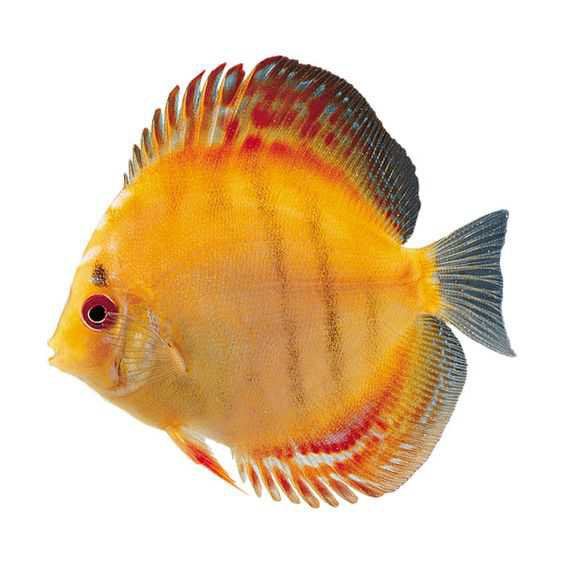 Fish - Pinterest