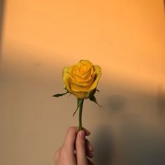 yellow, aesthetic, and shadow image | (oc) E L I Z A | Pinterest | Shadow images, Photography and Oc