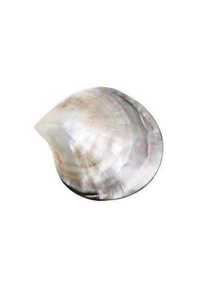 Violeta BY MANGO Seashell brooch