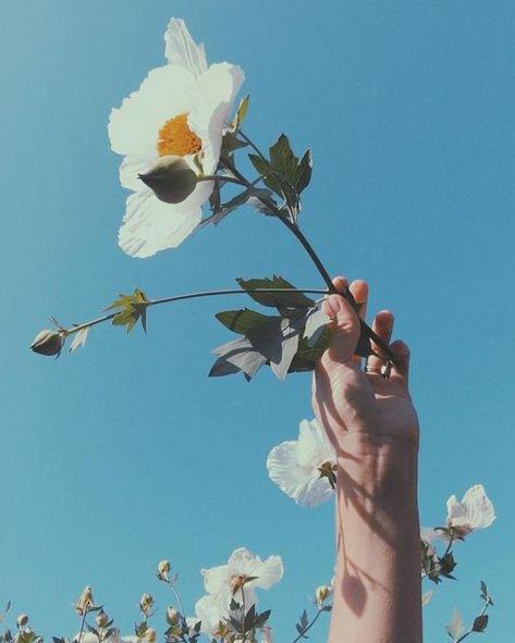 Summer Flower Aesthetic